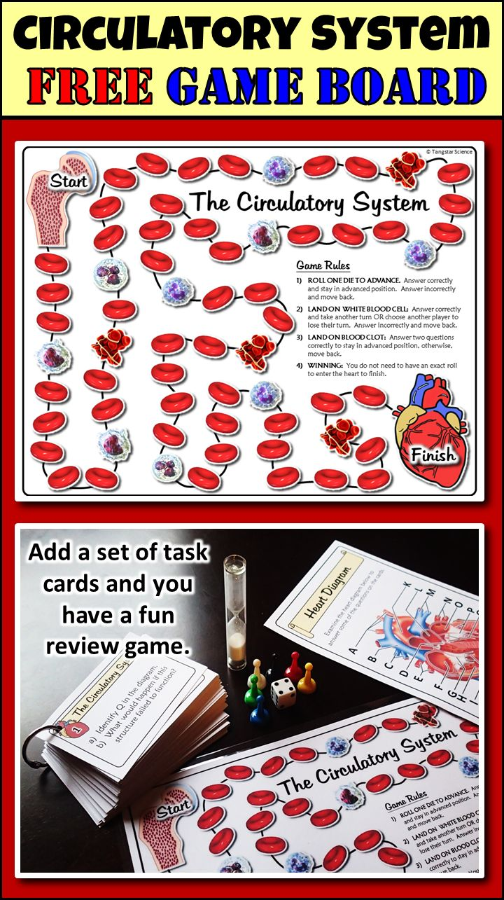 412 best Anatomy Club Snacks & Ideas images on Pinterest | Human ...