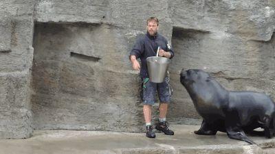 Bild der Woche Lovestory Seebär