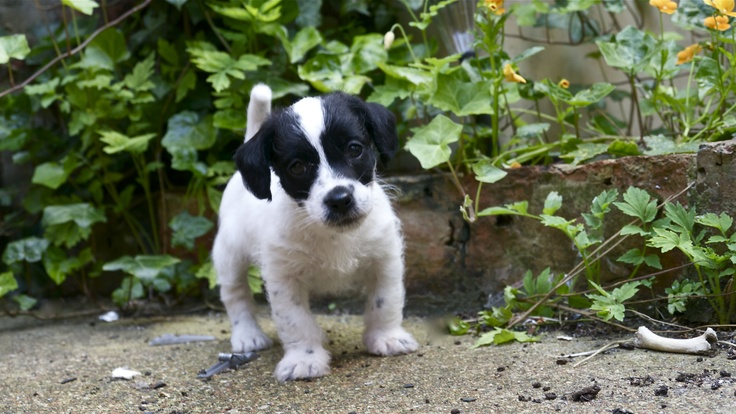 Our New Puppy Jackie Doodle: Puppy Jackie, Jackie Doodles