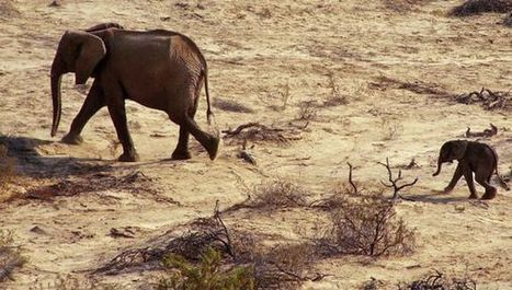 Horn of Africa faces drier weather - SciDev.Net | World Environment Nature News | Scoop.it