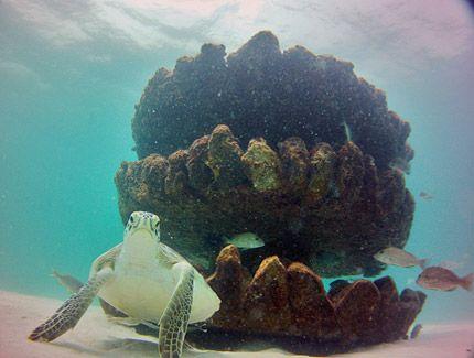 Navarre Beach Snorkeling - Florida's Playground - Navarre Beach