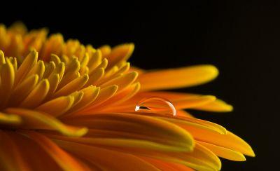 Drop - © Cristina Brunello