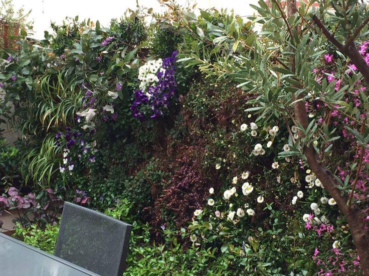 Pared vegetal en terraza realizada por Jardines y Rincones Paisajismo