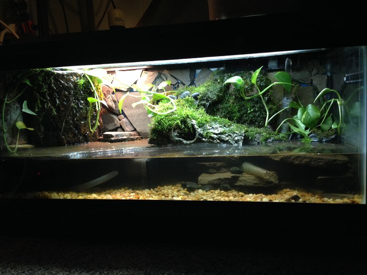 The waterfall terrarium and logs on pinterest for Aquarium waterfall decoration