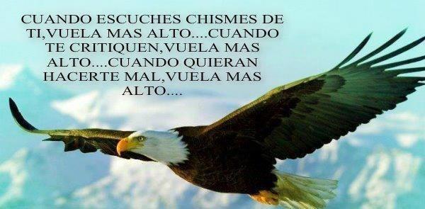 Siempre hay que volar...: Beautiful Animal, Eagles Flying, The Eagles, American Eagles,  American Eagle,  Haliaeetus Leucocephalus, Desktop Wallpapers, Beautiful Birds, Bald Eagles