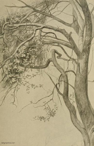 THE BOUGHS OF A CRAB APPLE TREE | Drawing and Doodles ...
