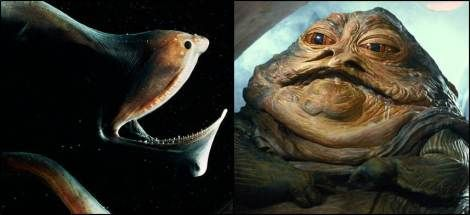 Gulper Eels have massive mouths that envelope their prey.  These eels often go long periods of time without food.  However, they can ingest massive amounts of food in their large mouth and stretch the size of there body dramatically, not unlike Jabba the Hutt.