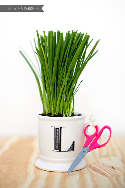 Great DIY gift for hostesses - DIY little mug of chives (or any herb)Herbs Gift, Teachers Gift, Herbs Hostess, Gift Ideas, Herbs Gardens, Diy Gifts, Thoughts Gift, Hostess Gifts, Laura Parks