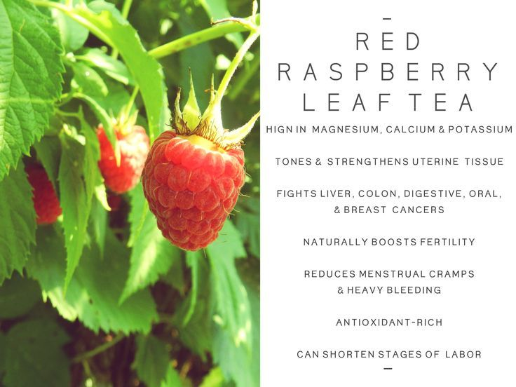 Red Raspberry Leaf Tea Benefits Fertility | Jidileaf co