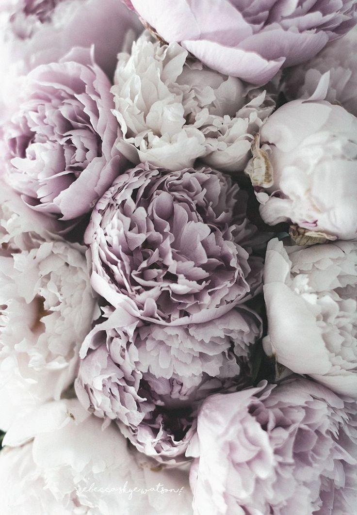 Фото кухонь розового цвета этого