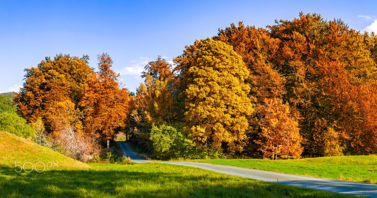 Autumnal Dreams - The beautiful colors of autumn on a sunny day in september.