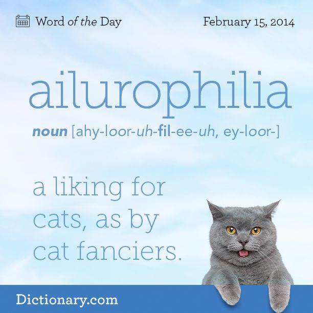 Ailurophilia: a liking for cats, as by cat fanciers