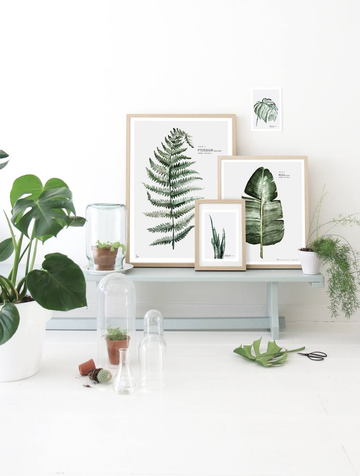 Botanical Art: Portraits of Houseplants from Dutch Painter Maaike Koster