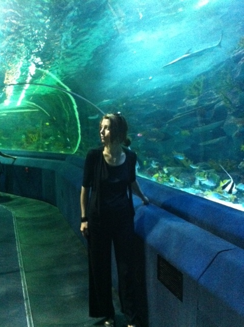 Akvaryum. Aquarium.