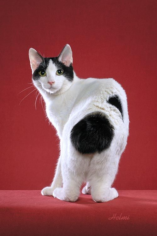 """* * """" I haz been demandin' to knowz wut happened to me tail since I wuz just a wee kitten."""""""