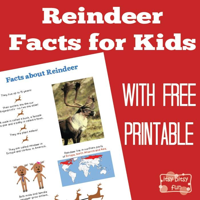 Reindeer Facts for Kids With Free Printables