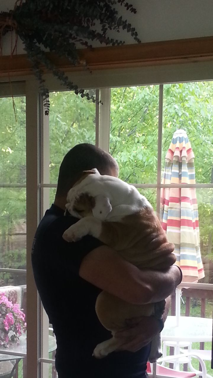 """Bulldog hugs are worth more than their weight in gold. They comprehend unconditionally love & devotion. It's the exchange of emotions, that makes them our """"babies"""" forever."""