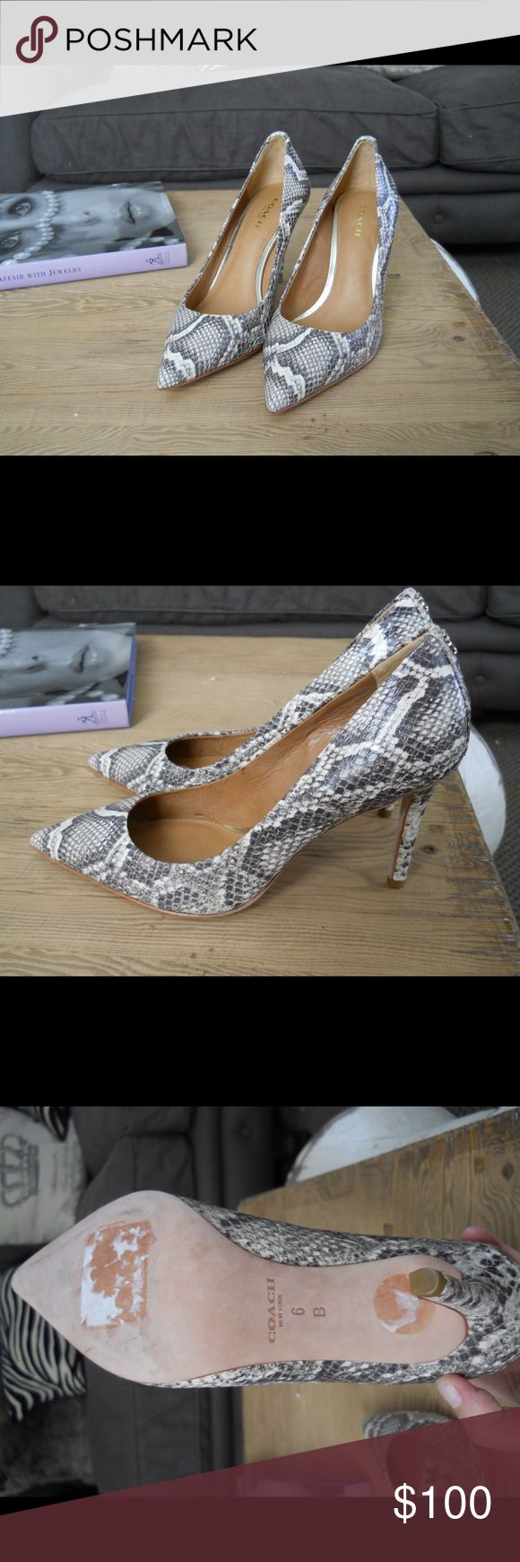 """New Coach """"Teddie"""" Snake Print Leather Pumps, 6M! Brand New (NO Box or Tag) Coach """"Teddie"""" Snake-Printed Leather Pumps, Size 6M, Bold Pattern, Leather Lining and Sole, 3 1/2"""" Heel, Has Been Sitting in My Closet, Will carefully Wrap with Bubble Wrap for Shipping Coach Shoes Heels"""