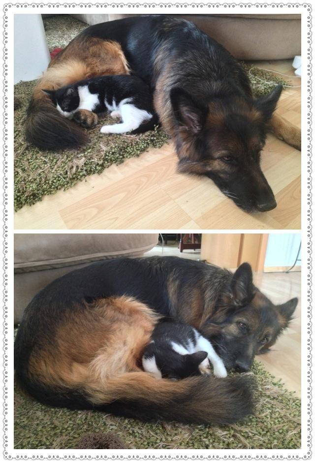.AWww. like my dog and her kitties.