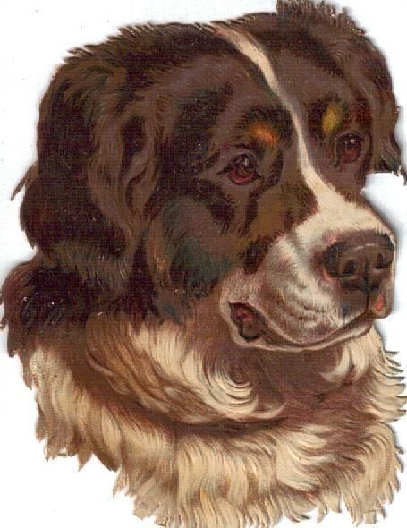 Larger Victorian Die Cut Scrap St. Bernard Dog c1880