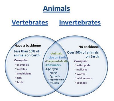 Learning Ideas - Grades K-8: Venn Diagram - Vertebrates and Invertebrates