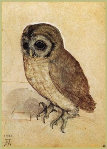Albrecht Durer, The Little Owl (1506, Albertina, Vienna - Link)