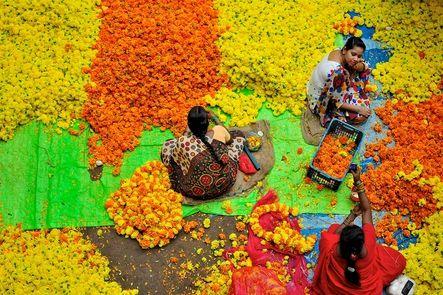 Cosen y trenzan las flores artesanalmente en Bangalore, la 'ciudad jardín'. En la cultura india, las flores se usan como ofrendas religiosas a los dioses. Además, las mujeres adornan sus largas melenas con coronas florales para aumentar su belleza.