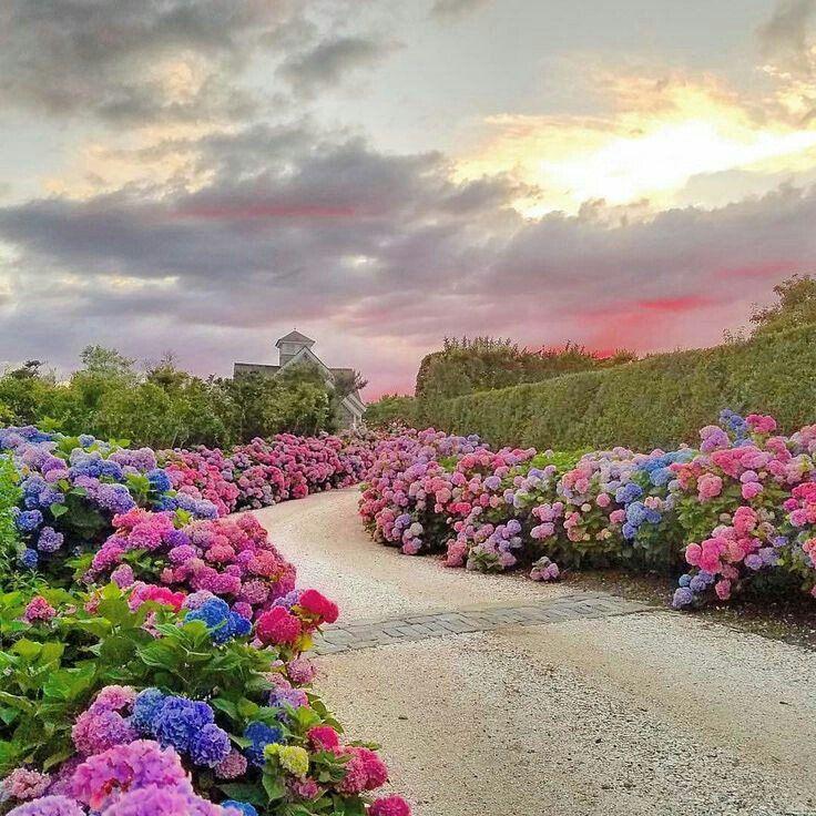 Muneer Ahmad Bhatti Mabnw Twitter Beautiful Gardens Dream Garden Hydrangea Garden