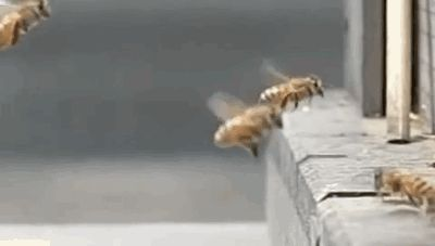 Two bees who also have really bad timing:   21 Things You've Never Seen Before In Your Life