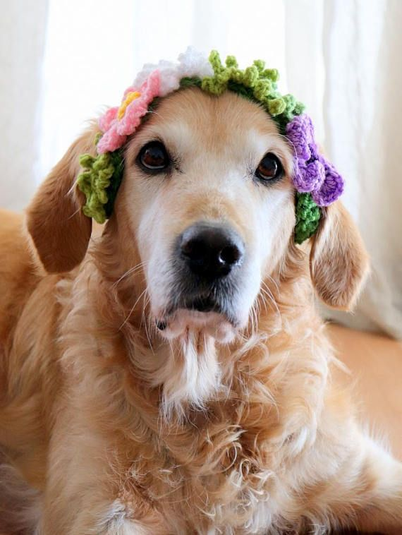 Dog Wreath Flower Wreath for Dogs Dog Flower Crown Dog
