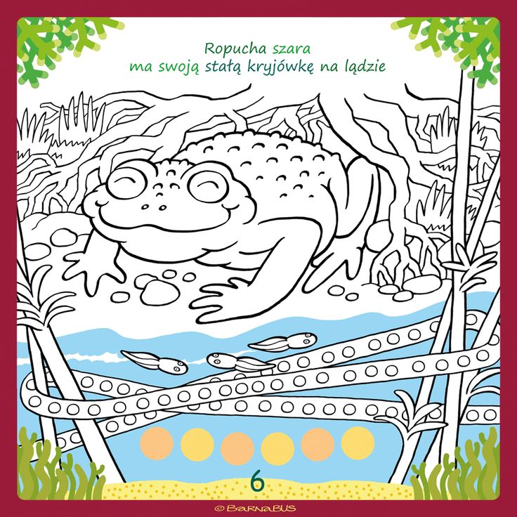 © Barnabus - #Kolorowanka Domy zwierząt ▪ Coloring book The Houses of #Animals - #Toad has its hiding place on land - page 06.