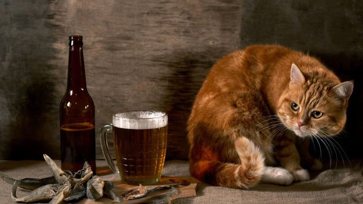 Hd Wallpapers Funny Animals