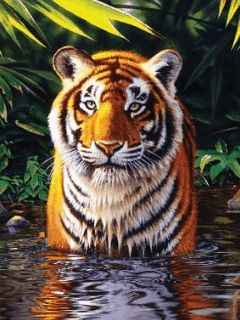 Download Tiger Mobile Screensavers for your cell phone | MobileTonia.com