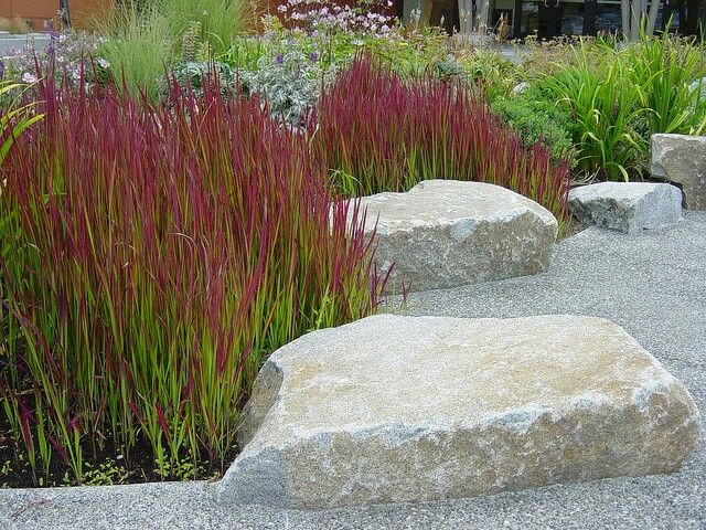 Japanese blood grass pavement edging and accent garden for Low mounding ornamental grasses