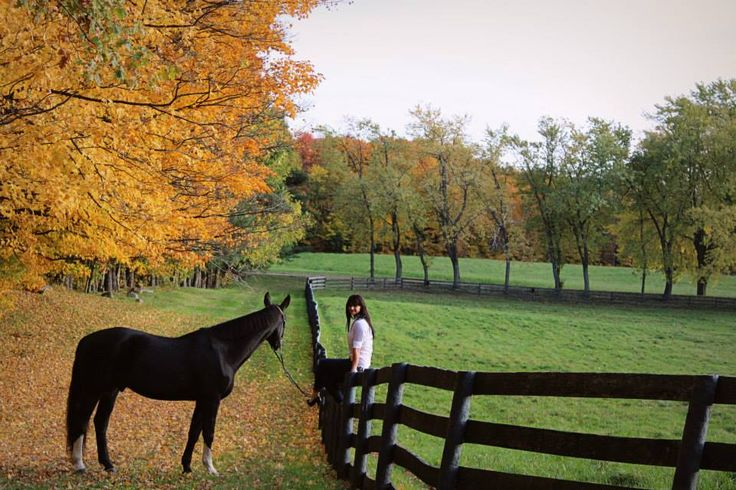 Horse, equine, fall, yellow, leaves, fashion, pose