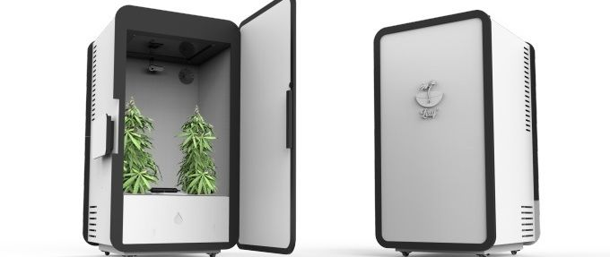 Leaf, la plantation de cannabis connectée