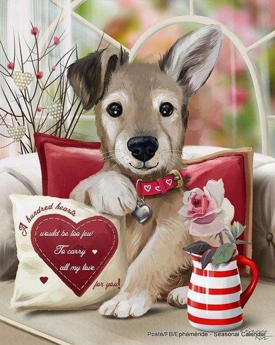 #Fotos #Foto #Photo #photography #Peludos #Mascotas #Mascottes #Pets #Mascot #Do…