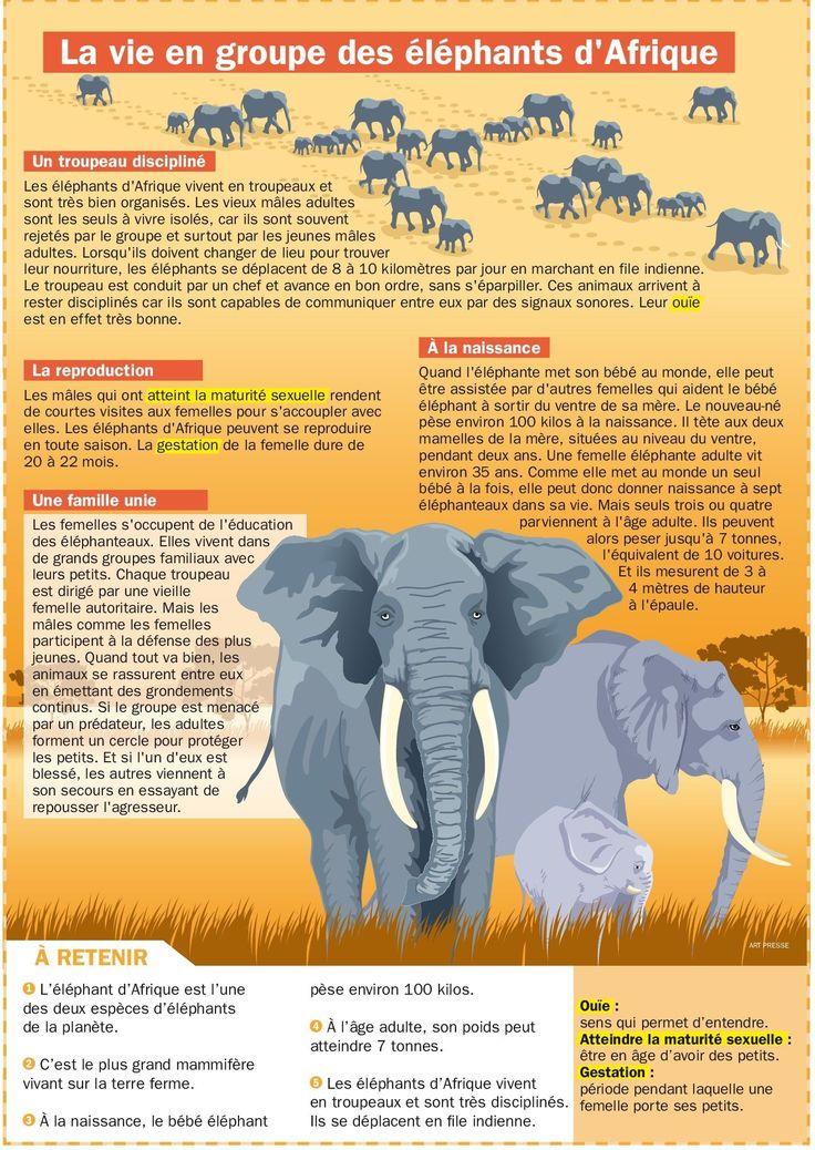 La vie en groupe des éléphants d'Afrique