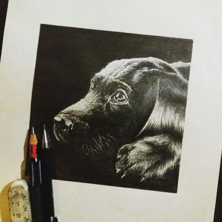 Cachorro terminado