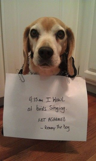 Another Case of Dog Shamming. Not ashamed. Haha