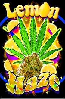 Lemon Haze - Black Light Poster