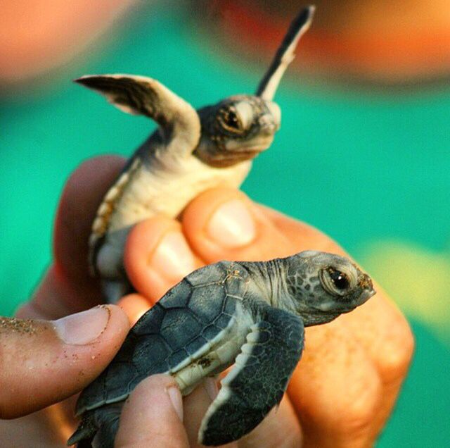 how to become a sea turtle biologist