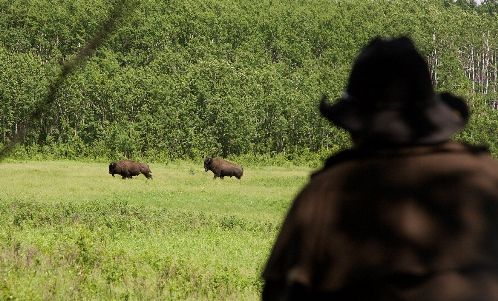 Experience life on a ranch! Saddle up and head into Prince Albert National Park to view Canada's only free ranging wild Plains bison still within their historic range.