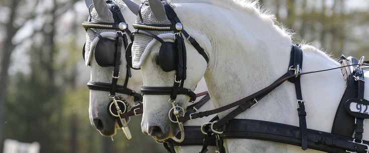Wind Chase Farm | Florida's premier horse and carriage for hire company