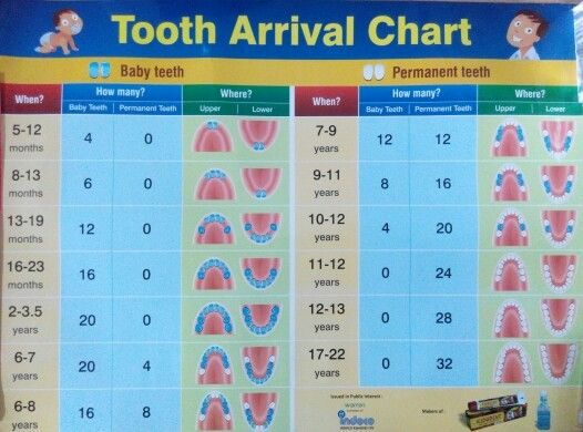 Tooth arrival chart Both for deciduous teeth and permanent teeth