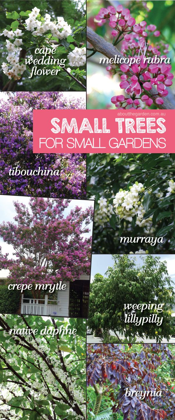 11 best about the garden magazine issues images on for Small garden trees queensland