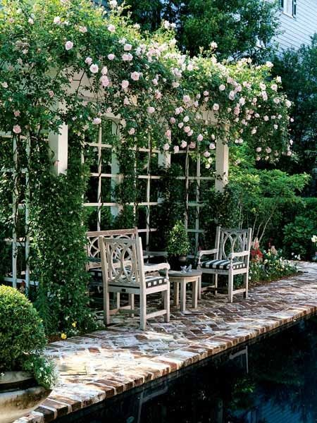 New Dawn: The Best Climbing Rose In The World? from Modern Country Style blog: …