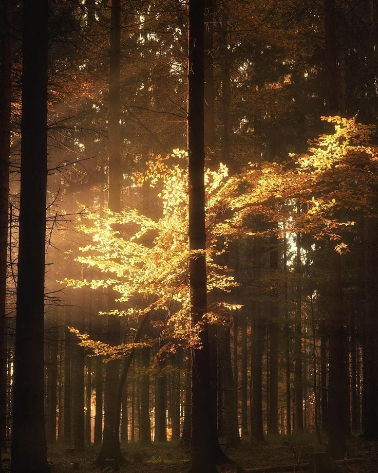 A brief strike of light transforms a dark forest scene into a magical play of light. Shot in the woods in Cologne