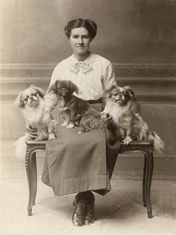 Circa 1900: A woman with three pekingese.