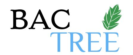 Our top-notch tree trimming services can boost the aesthetic of your landscape, whether residential or commercial. BAC Tree boasts a large number of tools and crews to serve our customers, no matter where they live in the Houston area! Give BAC Tree a call today and schedule a free consultation and estimate. We offer our tree trim services at friendly, affordable prices that can keep your landscape looking clean without putting a dent in your budget!